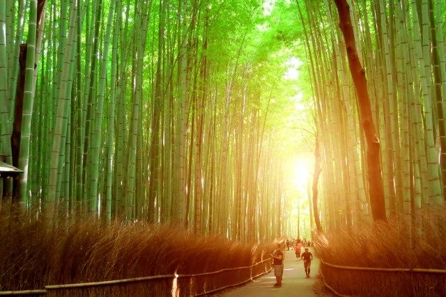 京都観光のコツ